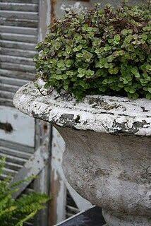 Herbs in a rustic urn