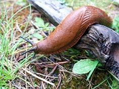 12 Easy Tips for Getting Rid of Slugs in your Garden