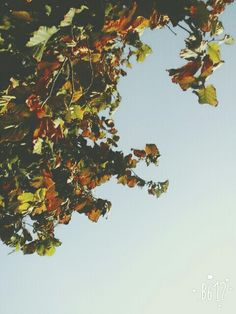 It's autumn. I love it.
