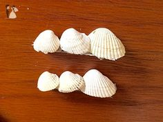 Pair of Small Cockle Shell Barrettes - Bridal fashion accessories (*Amazon Partner-Link)