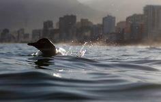 Pingouin Rio de Janeiro