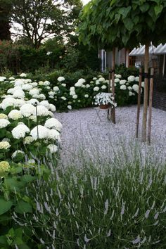 Hydrangea, lavender ... Beauty