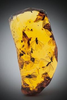 Amber with winged termite and winged ant inclusions (Hymenaea protera, Miocene) - Dominican Republic.