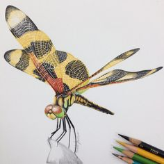 Dragonfly PRINT Insect Nature Color Pencil by Sharppencils on Etsy