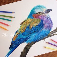 I finally completed the roller bird drawing! Acrylic paint, Faber Castell and…