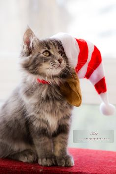 "** ""Jolly good. Kin we getz on wif de celebration and getz dis hat cremated?"""