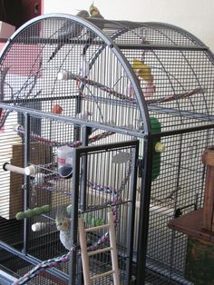 What do you need to set up a cage that will meet all your bird's needs and keep him happy? This article details things to consider when choosing perches, food and water bowls, mineral supplements and toys.