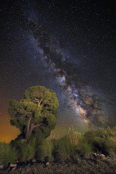 Photo Magical Tree by Álvaro y Jose Manuel Pérez Alonso. Brothers  on 500px