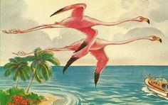 Vintage postcard.  Pink flamingos in flight