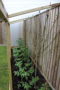 Tomato shelter