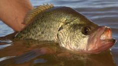 Crappie Redux: Secrets for Catching Fall Slabs | Field & Stream