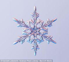 Hermosas fotos de copos de nieve y ¿cómo se forman? | Planeta Curioso