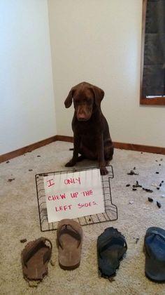 28 Dogs That Definitely Aren't Mans Best Friend - BlazePress