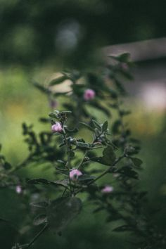 niknyllenne:       Weeds are flowers too once you get to know...