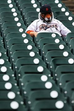 Gotta love those Tiger fans.  We're all crazy. Crazy over the Tigers that is.