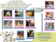 SO VERY URGENT IN TEXAS!!!!!  ALL ARE OFF HOLD  7AM TOMORROW~03/23/14  WITHOUT PREPAID ADOPTION OR RESCUE TAG THEY CAN BE EUTHANIZED AT THAT TIME!!!!  PLEASE SHARE/FOSTER/DONATE/ADOPT!! https://www.facebook.com/226541667442185/photos/a.226895917406760.48995.226541667442185/591395854290096/?type=1&comment_id=1898464&offset=0&total_comments=14#!/GarlandAnimalShelterVolunteerPage