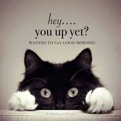 Funny Good Morning Memes, Good Morning Quotes For Him, Good Morning Beautiful Quotes, Morning Inspirational Quotes, Good Morning Messages, Morning Humor, Good Night Quotes, Good Morning Wishes, Good Morning Cat