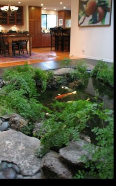 I love the idea of an indoor pond