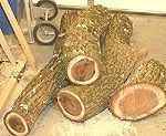 Logs to Blanks - NewWoodworker.com