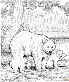 American Black Bear Family Coloring Page From Bears Category Select 26983 Printable Crafts Of Cartoons Nature Animals Bible And Many