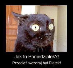 niezła była impreza' użytkownika Janusz S. Anxiety Cat, Weekend Humor, Friday Humor, Funny Friday, Funny Cartoons, Funny Memes, Funny Gifs, Memes Humor, Polish Memes