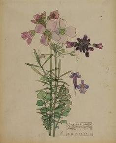 anthemsweet: Watercolor flowers by Charles Rennie Mackintosh, part two