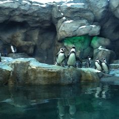 Calgary zoo I Am Canadian, Calgary, Penguins, Places Ive Been, Cute Animals, Creatures, Canada, Spaces, World