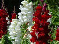 35 best Gardens, flowers & trees images on Pinterest | Gardening, Plants and Garden tips