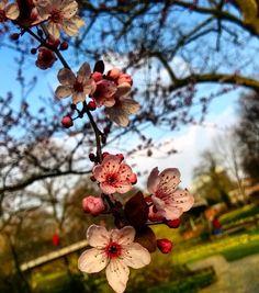 #Wochenende  Was habt ihr so geplant? #visitkarlsruhe #visitbawu #karlsruhe #weekend #travel #placetobw #bwjetzt #flower #flowergram #magic #amazing #spring #love #instalike #picture #pink #bestoftheday #tgif #friday