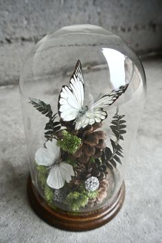 Vintage Taxidermy Butterflies Specimen by ThEeRabbitHole on Etsy