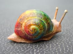 Leaving a Trail of Colour in 3D - some of you might be familiar with my artwork Leaving a Trail of Colour and so I thought I would attempt to bring it to life by carving a snail from a tagua nut.
