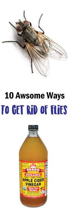 randomsomethings.com index.php 2017 02 09 10-little-known-ways-to-get-rid-of-flies