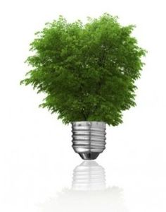 Photo about Light bulb and green tree growing from it isolated on white. Renewable energy and ecology concept. Image of recycling, environment, bulb - 5599446 Alternative Fuel, Energy Efficient Homes, Growing Tree, Do It Yourself Home, Green Trees, Spring Green, Renewable Energy, Solar Energy, Go Green