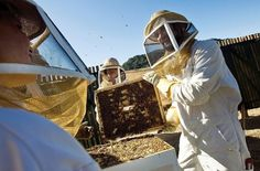 Beekeeping at @CarmelValleyRanch