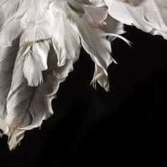 Black, with white feathers