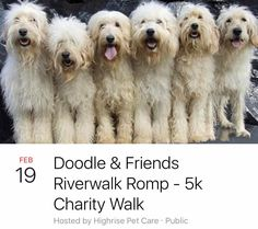 Join Chicago's most adorable Doodles and their friends for a 5k romp along the Chicago Riverwalk this Sunday February 20th at 11:00am! The 5k walk will benefit the Chicago Canine Rescue and you'll enjoy the 60 degree weather with all your favorite poochie pals!  We'll meet at the corner of Wacker & Orleans then go for a stroll towards the Lake! Coffee and Doughnuts will be provided by Highrise Pet Care. $5 donations are welcome which benefit the Chicago Canine Rescue. Highrise Pet Care will…