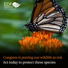 Some in Congress are working to limit Endangered Species protections. Take action to fight back!