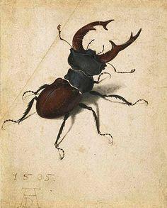 Stag Beetle by Albrecht Durer