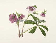 Botanical artist & tutor, Julia creates  beautiful, detailed artwork - please read her biography on her dedicated board for more information. Due to the time consuming (but totally absorbing & satisfying !!) nature of the botanical style , Julia is only available as a day workshop or course.