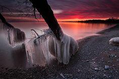 Árboles congelados en las orillas del lago Ontario