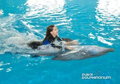 Get to know your most favourite mammals and plunge into the Dolphin Planet. Book today @ www. Dubai Dolphinarium, Most Beautiful Animals, Most Favorite, Getting To Know You, Dolphins, Mammals, The Good Place, Exotic, Swimming