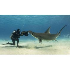 Hammerhead Shark with the diver | Photography by unknown master #Padgram