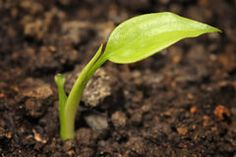 young-plant-4438450.jpg (240×160)