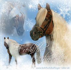 Merry Christmas - haflinger stallion liz. Steiermark, owner Sandra Luber http://www.kohlfuchshaflinger-luber.de
