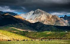 New Zealand Landschaft, Berg, Himmel, Wolken, Weide, Herde