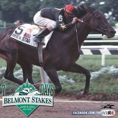 Risen Star, Secretariat's son Preakness Stakes, The Great Race, Horse Facts, Horse Silhouette, Sport Of Kings, Thoroughbred Horse, Racehorse, The Belmont Stakes, Horse Pictures