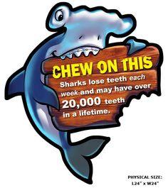 Fun Shark Dental Fact Wall Decor by Imagination Dental Solutions