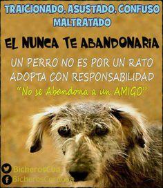 Un perro no es un rato Adopta con RESPONSABILIDAD @BicherosCba