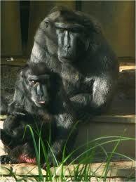 Starvation diet did not lengthen longevity in monkeys - News - Bubblews