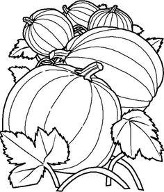 Delicous Pumpkins Coloring Page